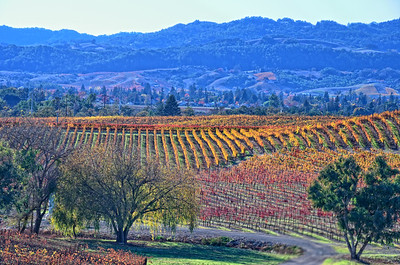 Napa on Segway and William Hill Winery
